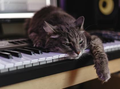 5 zalet, za które pokochasz kota syberyjskiego