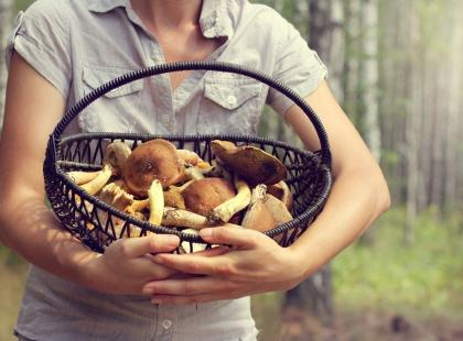 5 zasad, których przestrzeganie uchroni cię przed zatruciem grzybami!