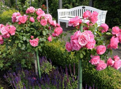6 kroków do rosarium