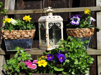 6 kroków do własnego ogrodu