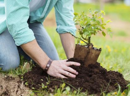 6 krzewów - idealnych do sadzenia wiosną