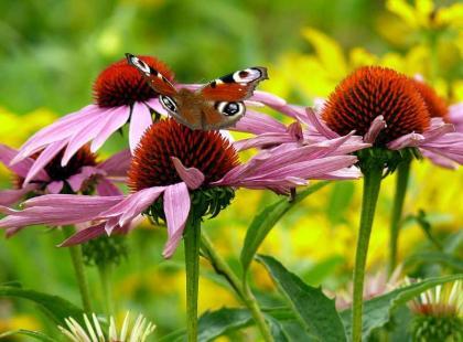 6 pożytecznych owadów w ogrodzie