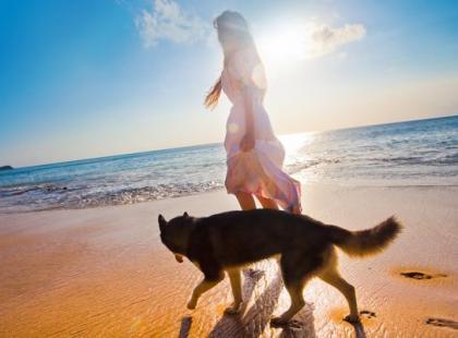 6 rad, jak się opiekować psem staruszkiem
