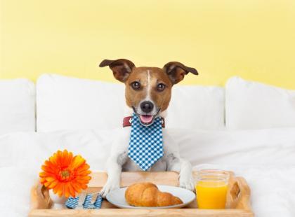 7 błędów w żywieniu psów