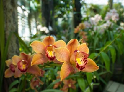 7 najdłużej kwitnacych rekrodzistów. Zobacz, jak pięknie i długo kwitną te kwiaty. Specjalnie wybraliśmy je dla ciebie!