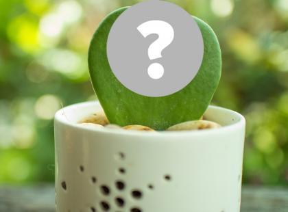 7 najdziwniejszych roślin doniczkowych, o których nawet nie miałaśpojęcia że istnieją!