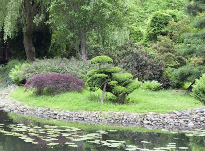 7 najładniejszych roślin do oczka wodnego! Wybierz odpowiednie dla twojego ogrodu!