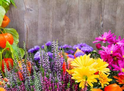 7 najpiękniejszych jesiennych kwiatów