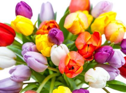 7 rad jak przedłużyć trwałość bukietu z tulipanów