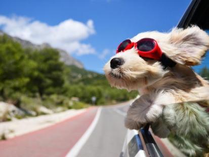 7 rad jak przewozić psa w samochodzie