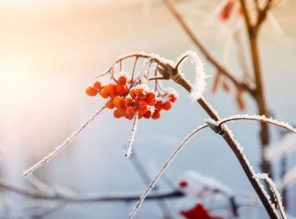 7 roślin, które są piękne nawet zimą