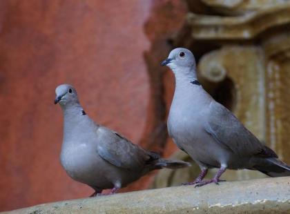 7 sposobów na gołębie