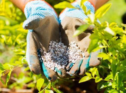 7 ważnych zasad bezpiecznego stosowania chemii w ogrodzie
