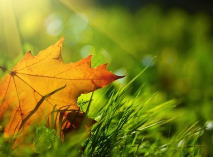 7 ważnych zasad zakładania trawnika jesienią