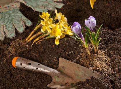 8 najważniejszych prac ogrodowych, które warto wykonać pod koniec marca