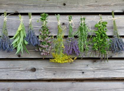 8 zasad suszenia kwiatów