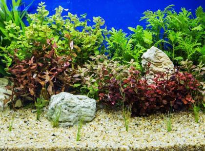 9 efektownych i mało wymagających roślin akwariowych