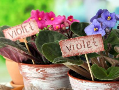 9 roślin domowych dla zabieganych
