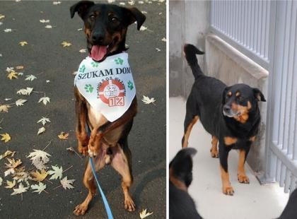 Adoptuj psa lub kota - czekają w schroniskach!