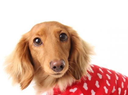 Agresja psa wobec innych psów