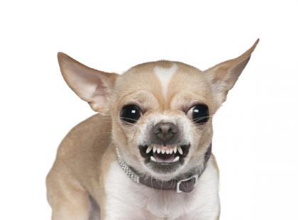 Agresja u psów - skąd się bierze i jak jej zaradzić?