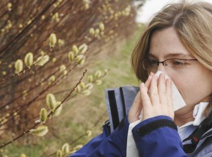 Jak dochodzi do powstania alergii na pyłki?/fot. Fotolia