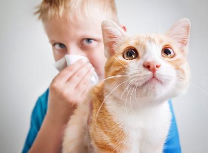 Alergia na kota - jak sobie z nią radzić?