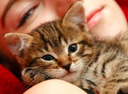 Alergia na sierść kota
