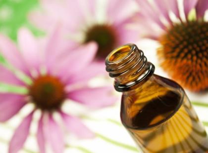 Aloes i jeżówka – najpopularniejsze leki roślinne wzmacniające odporność