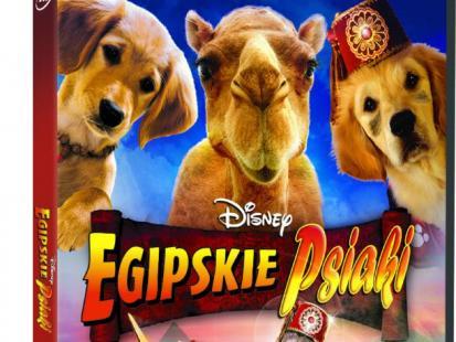Bajka Egipskie psiaki na DVD