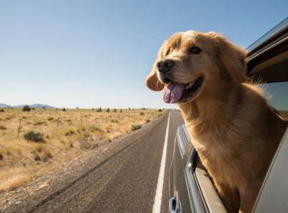 Bezpieczna podróż ze zwierzakiem