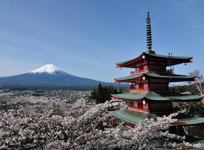 Bliżej orientu: Hanami - święto kwitnącej wiśni