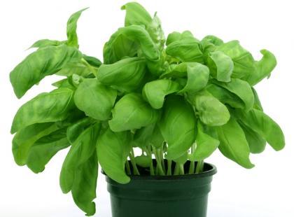 Bogactwo białka w zieleninie