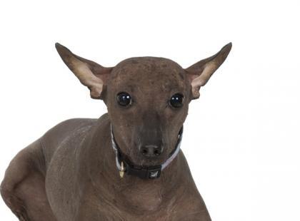 Brzydkie rasy psów są trendy!