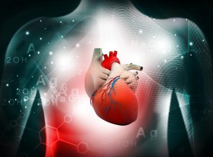Budowa ludzkiego serca bez tajemnic – nie tylko dla uczniów!