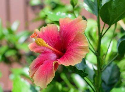 Chcesz mieć balkon pełen egzotycznych roślin? Zaplanuj go już teraz!