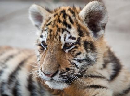 Chronione zwierzęta są zabijane, by tworzyć z nich leki