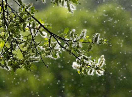 Co alergik powinien wiedzieć o kalendarzu pyleń?