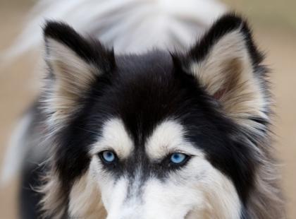 Co chce Ci powiedzieć Twój pies? Poznaj mowę jego ciała!