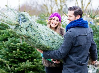 Co może żyć na twojej świątecznej choince? Czy jesteś pewna, że nie masz właśnie w domu... kleszcza?