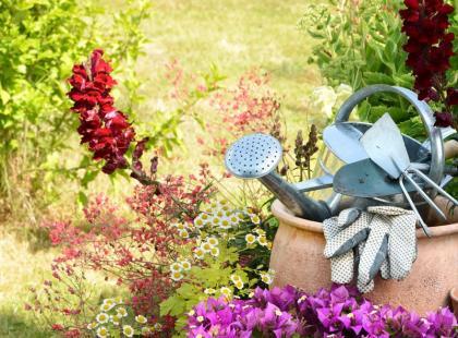 Co musisz zrobić w lipcu w ogrodzie i na balkonie?