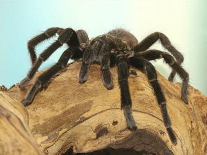 Co oznacza, jeśli śni mi się pająk?