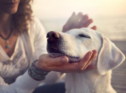 Co oznacza sen o kocie lub psie? Poznaj jego znaczenie!