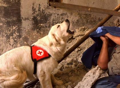 Co potrafią psy ratownicze?
