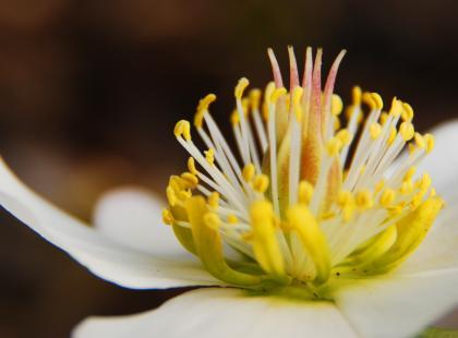 Co powinieneś wiedzieć o homeopatii?