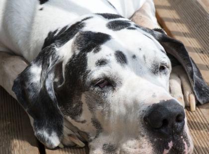 Co robić, by pies nie był otyły?