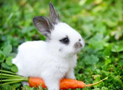Co robić, gdy królik nie lubi swojej klatki?