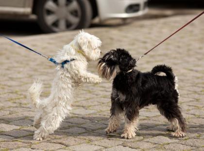 Co robić, gdy pies szarpie smycz?