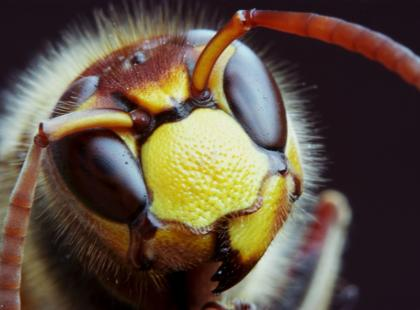 Co robić, gdy ukąsi nas owad?