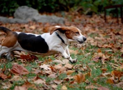 Uwaga! Wbrew pozorom niewskazane są zabawy patykami – w trakcie tych zabaw nie trudno o uraz u psa.